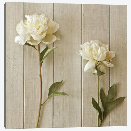 Two Peonies Canvas Print #SYM3} by Symposium Design Canvas Wall Art