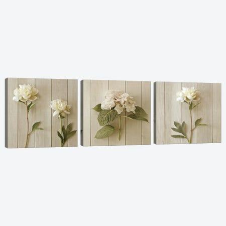Two Peonies Triptych Canvas Print Set #SYM3HSET001} by Symposium Design Canvas Artwork
