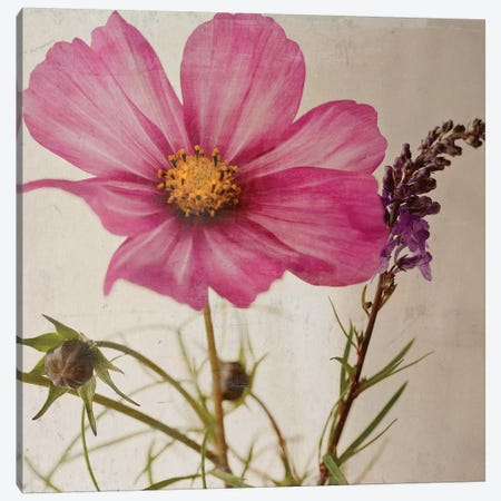 Single Cosmos Canvas Print #SYM42} by Symposium Design Art Print