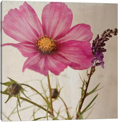 Single Cosmos Canvas Art Print