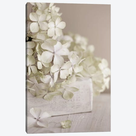 White Flowers Canvas Print #SYM55} by Symposium Design Canvas Art Print