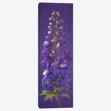 Purple Foxgloves II Canvas Print #SYM5} by Symposium Design Art Print