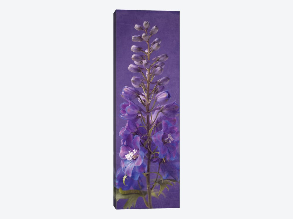 Purple Foxgloves III by Symposium Design 1-piece Canvas Art Print