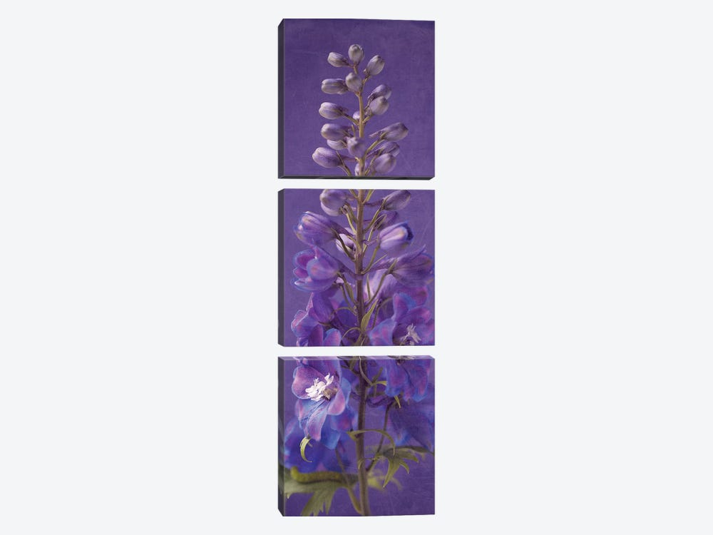 Purple Foxgloves III by Symposium Design 3-piece Canvas Print