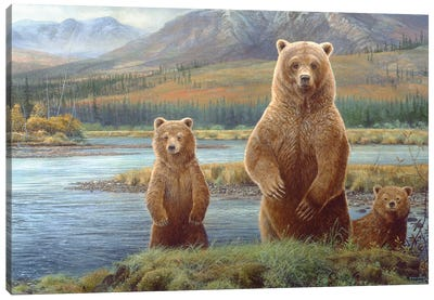 Grizzly II Canvas Art Print