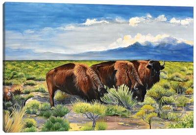 3 Buffalo Canvas Art Print