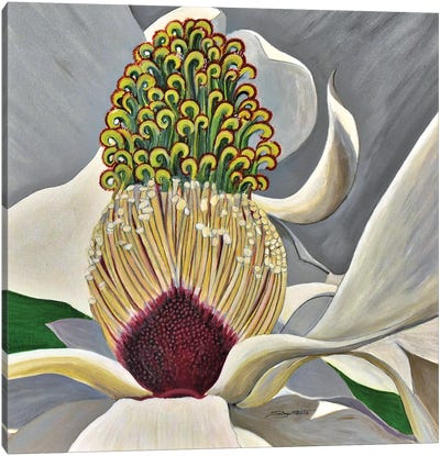 The Great Magnolia Canvas Art Print