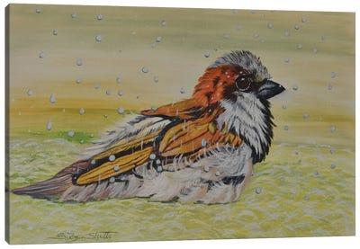 Sparrow Enjoying A Spring Rain Canvas Art Print
