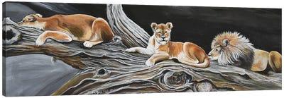 The Best Resting Spot Canvas Art Print