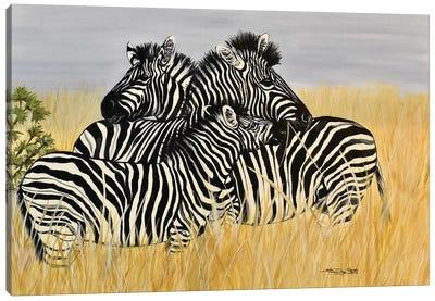 Zebra Family Canvas Art Print