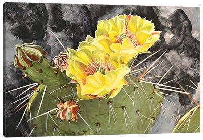 Cactus Bloom Canvas Art Print