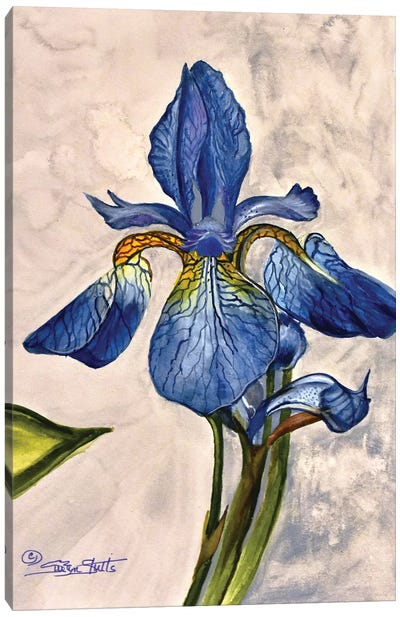 Blue And Gold Iris Canvas Art Print