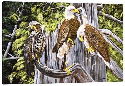 Three Eagles Canvas Art Print