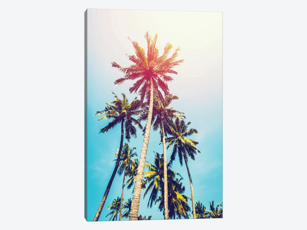 Palms In The Sun by Tai Prints 1-piece Canvas Artwork