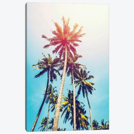 Palms In The Sun Canvas Print #TAI3} by Tai Prints Art Print