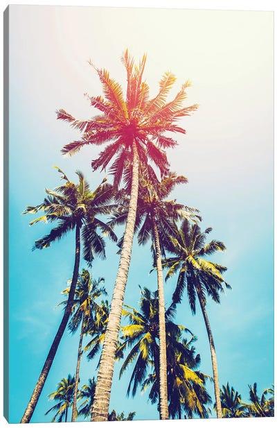 Palms In The Sun Canvas Print #TAI3