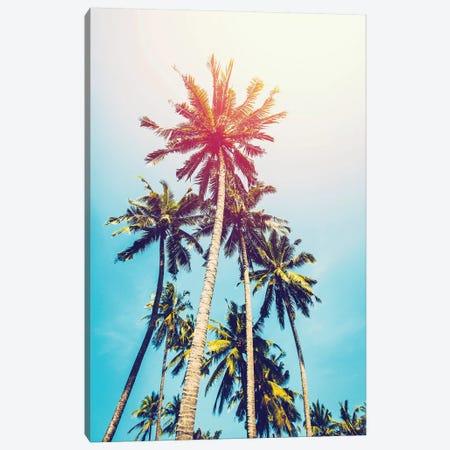 Palms In The Sun Canvas Print #TAI3} by Tai Prints Art Print