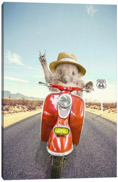 Hedgehog Traveler Canvas Art Print