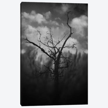 Black Canyon Canvas Print #TAL18} by Taylor Allen Canvas Print