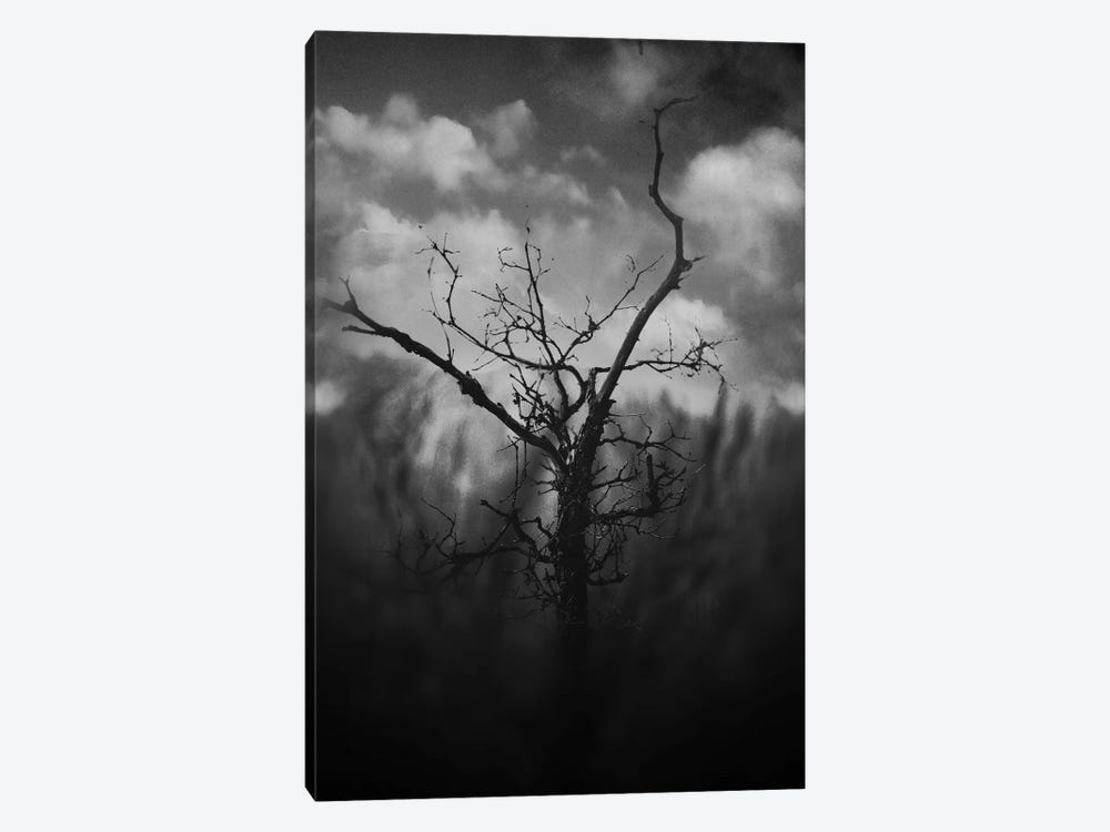 Black Canyon by Taylor Allen 1-piece Canvas Print
