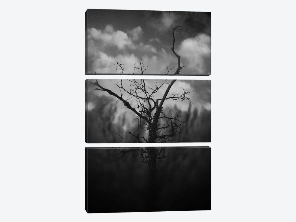 Black Canyon by Taylor Allen 3-piece Canvas Print