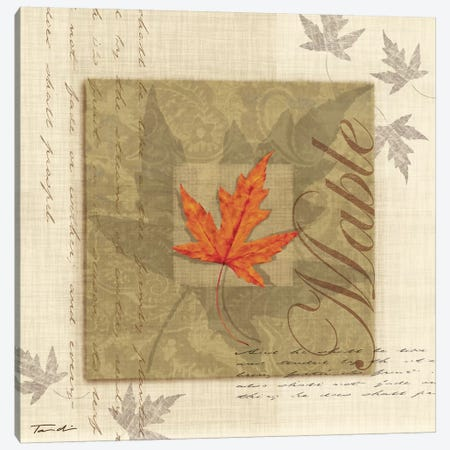 Maple Canvas Print #TAN122} by Tandi Venter Canvas Art