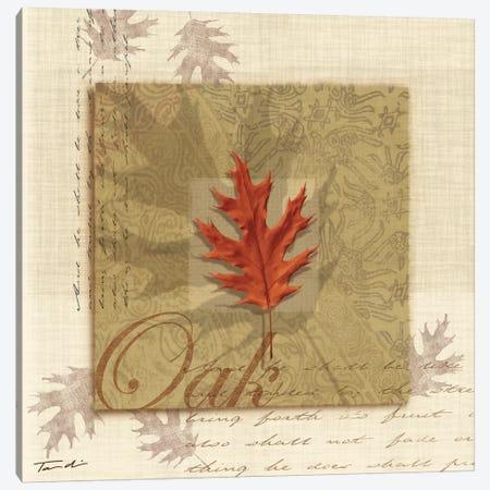 Oak Canvas Print #TAN131} by Tandi Venter Canvas Print
