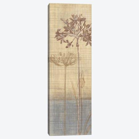 Botanical Sketchbook II Canvas Print #TAN34} by Tandi Venter Canvas Wall Art