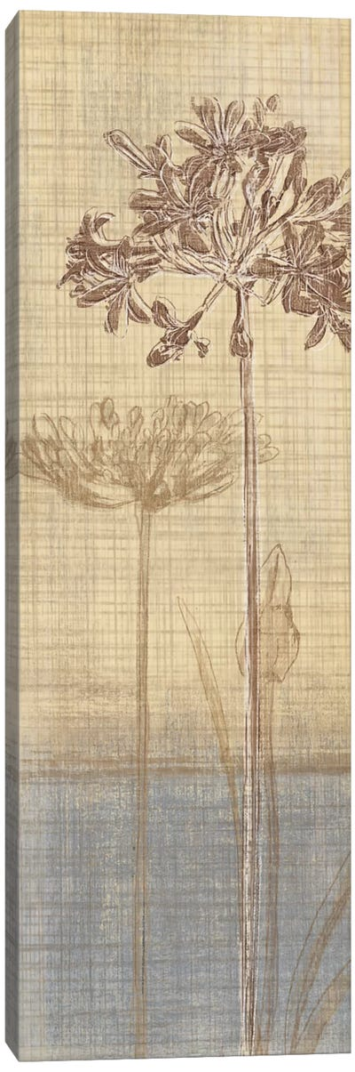 Botanical Sketchbook II Canvas Art Print