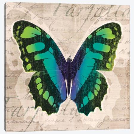 Butterflies II Canvas Print #TAN41} by Tandi Venter Canvas Wall Art
