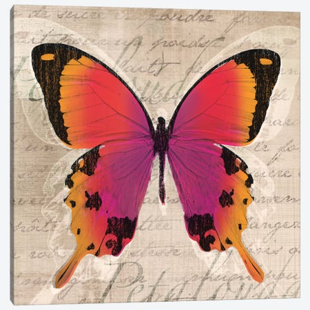 Butterflies III Canvas Print #TAN42} by Tandi Venter Canvas Wall Art