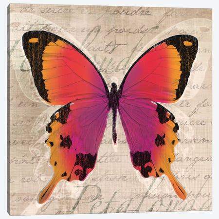 Butterflies III Canvas Print #TAN42} by Tandi Venter Canvas Wall Art