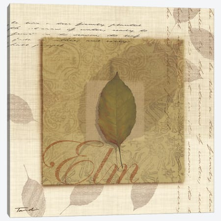 Elm Canvas Print #TAN68} by Tandi Venter Canvas Artwork