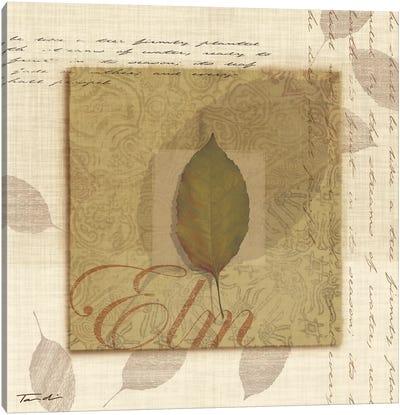 Elm Canvas Print #TAN68