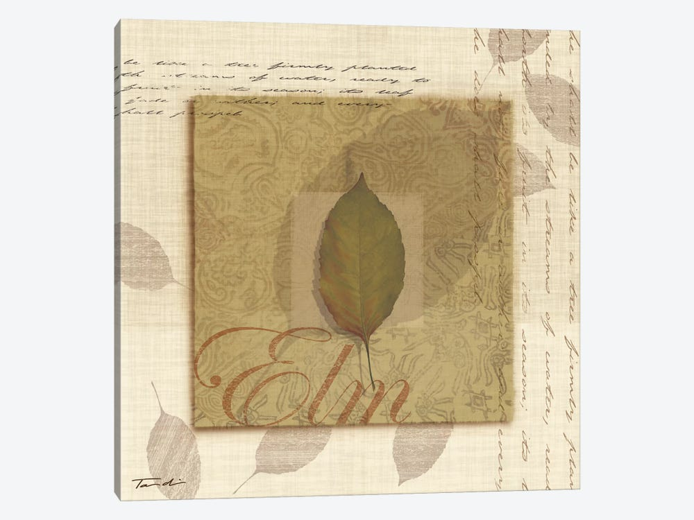Elm by Tandi Venter 1-piece Art Print