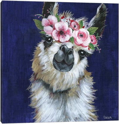 Lady Llama Canvas Art Print