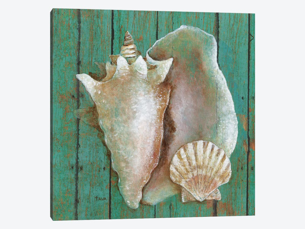 Conch by Tava Studios 1-piece Canvas Art Print