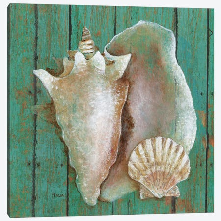 Conch Canvas Print #TAV132} by Tava Studios Canvas Print