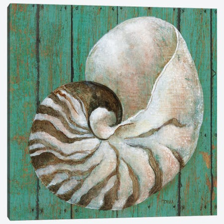 Nautilus Canvas Print #TAV145} by Tava Studios Art Print