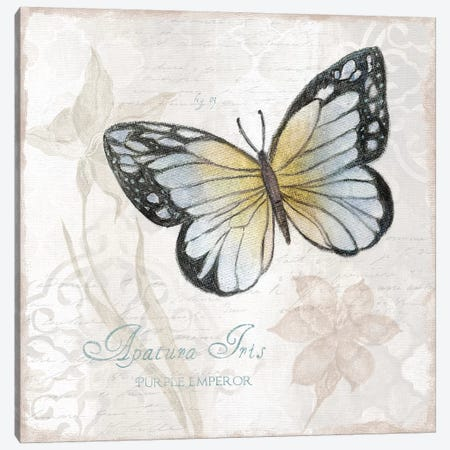 Postcard Butterfly IV Canvas Print #TAV182} by Tava Studios Canvas Artwork