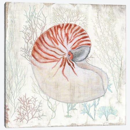 Coral and Shell I Canvas Print #TAV199} by Tava Studios Canvas Print