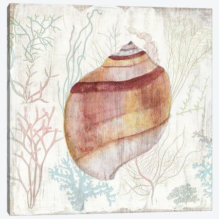 Coral and Shell II Canvas Print #TAV200} by Tava Studios Art Print