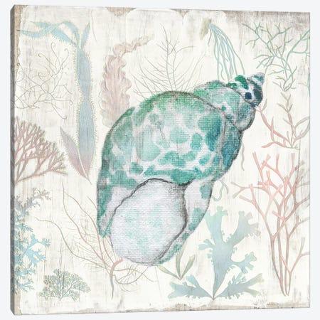 Coral and Shell IV Canvas Print #TAV202} by Tava Studios Canvas Print