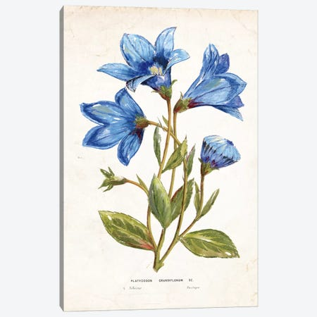 Blue Impression Canvas Print #TAV22} by Tava Studios Canvas Artwork