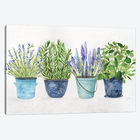 Fresh Herb Collection Canvas Print #TAV242} by Tava Studios Art Print