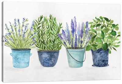 Fresh Herb Collection Canvas Art Print