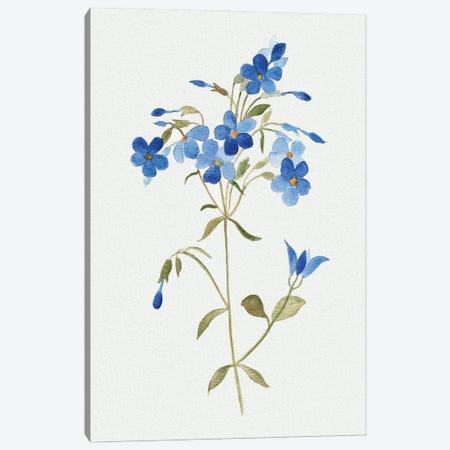 Blue Blossom Botanical II Canvas Print #TAV256} by Tava Studios Art Print