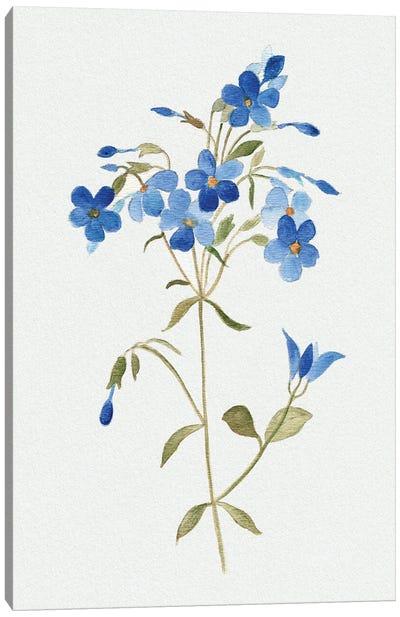 Blue Blossom Botanical II Canvas Art Print