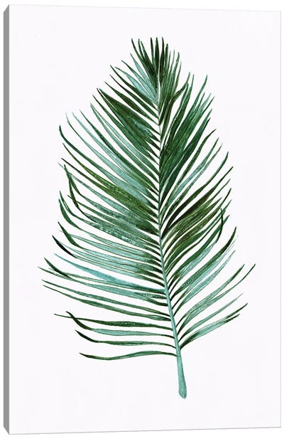 Sage Frond I Canvas Art Print