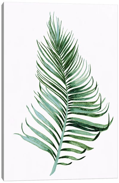 Sage Frond II Canvas Art Print